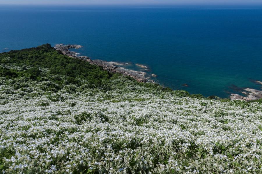 Vào mùa hè, những đồi hoa dại ở hai bên đường tàu cũng thường xuyên nở rộ và vẽ nên một bức tranh rực rỡ